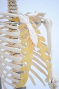 Clinique-chiropratique-Chambly-traitement-douleurs-intercostales