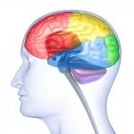 CCC-neurologie-fonctionnelle